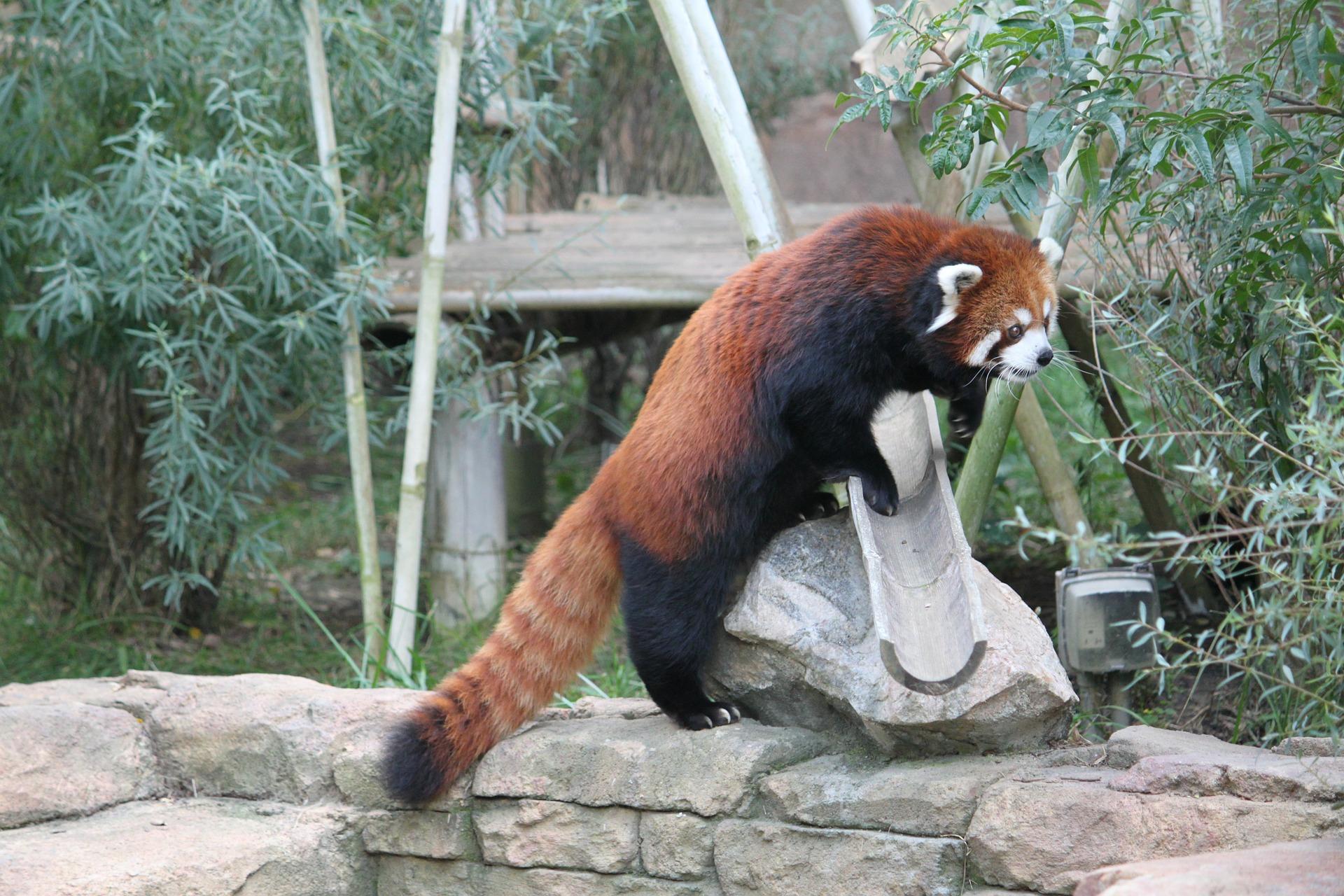 small wins panda day 4.jpg