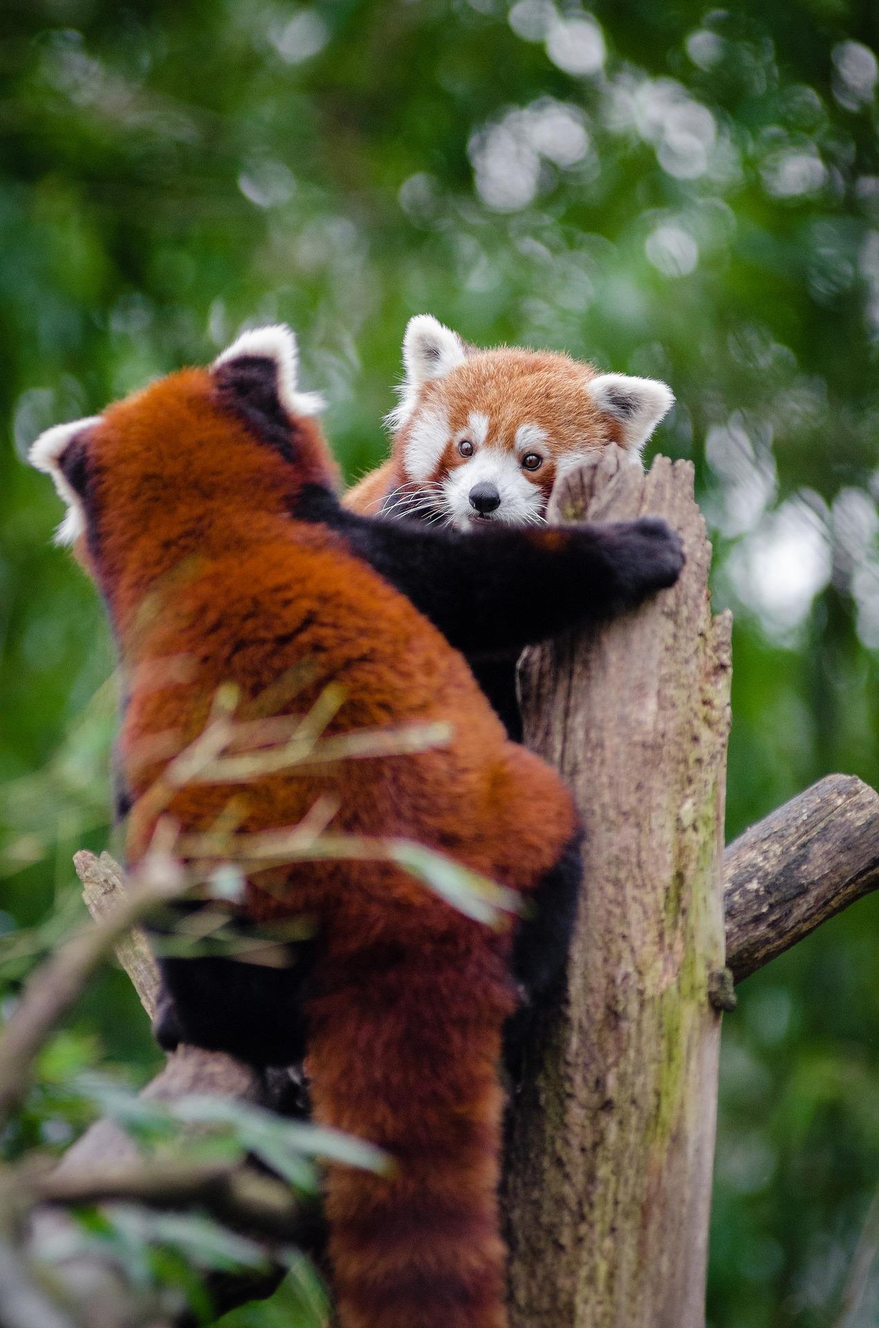 socail pandas day 5.jpg