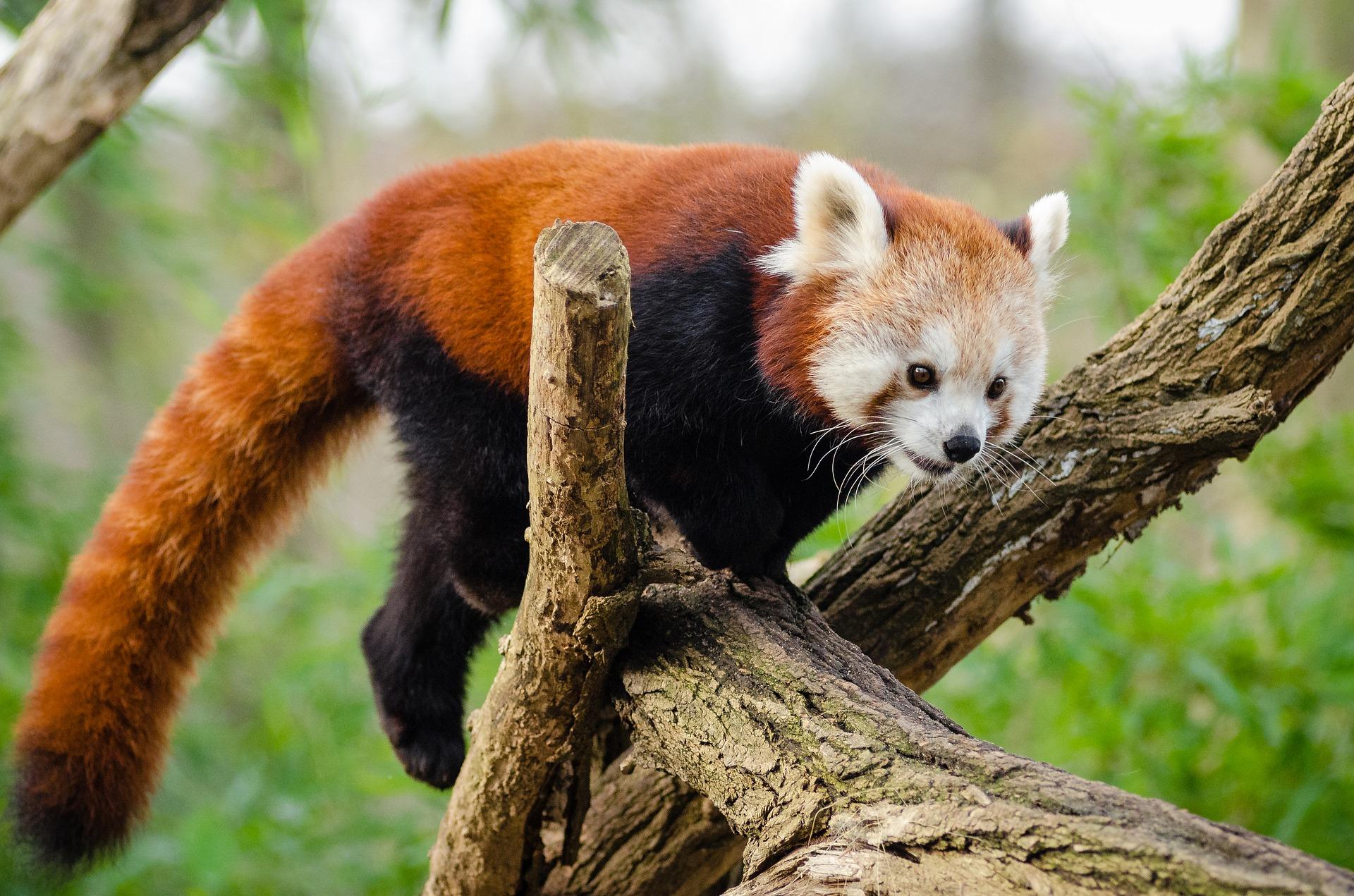 exercise panda day 6.jpg