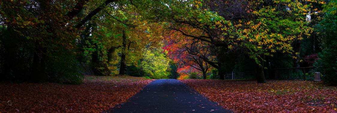 Autumn Effect