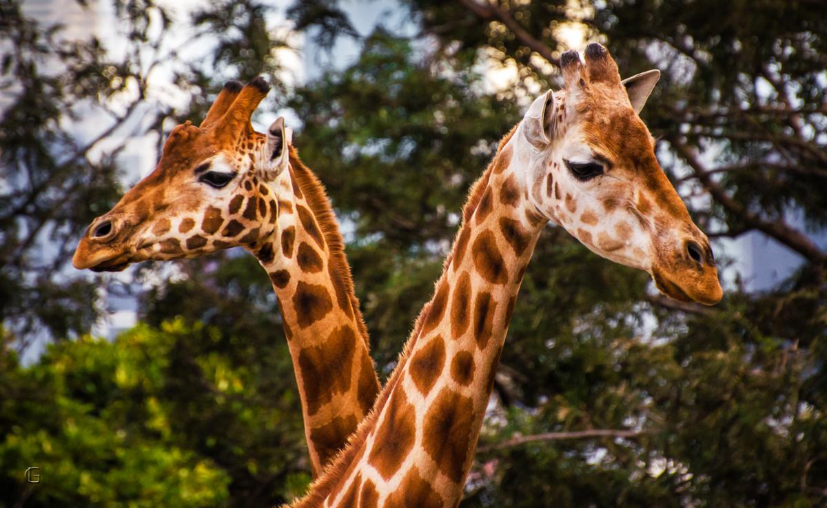 Tall Couple