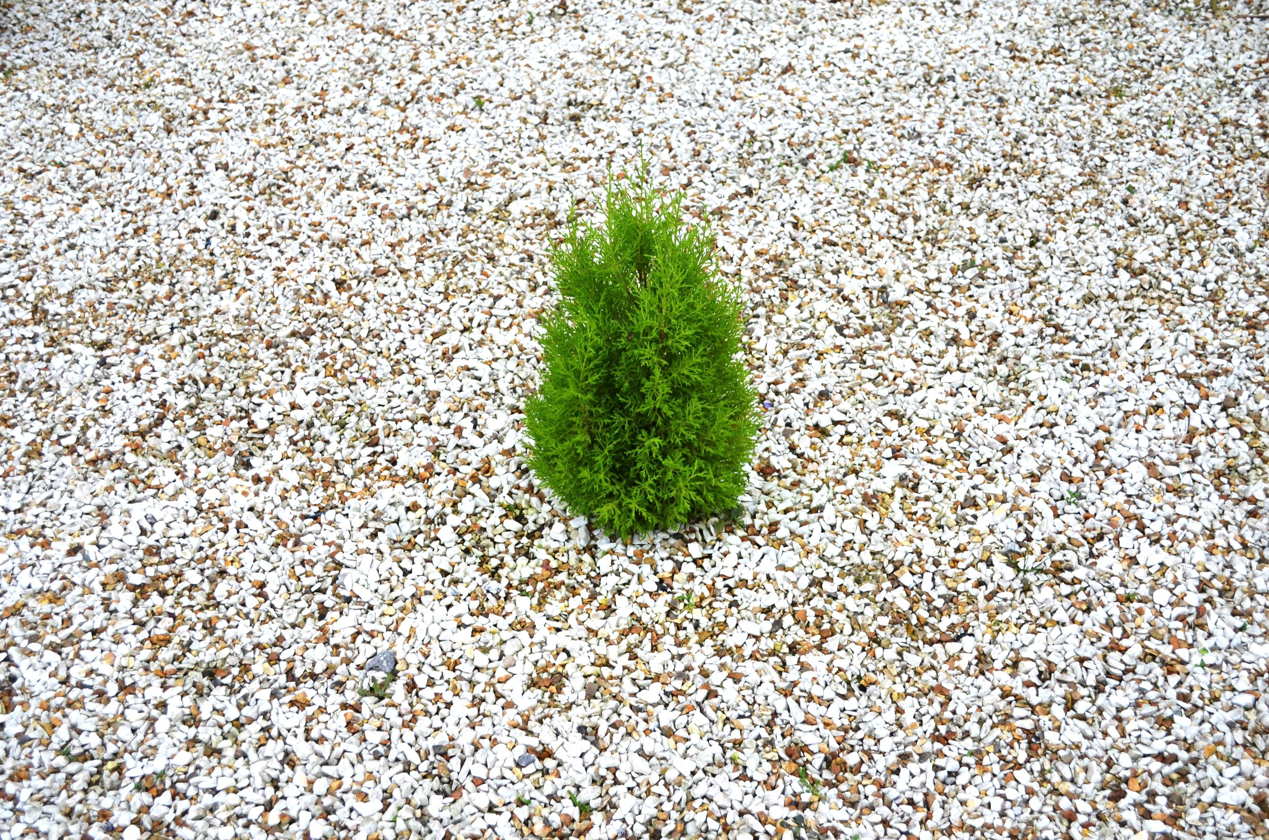 small_green_tree_200348.jpg