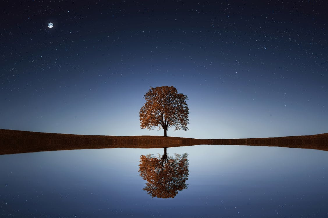 tree and reflection.jpeg