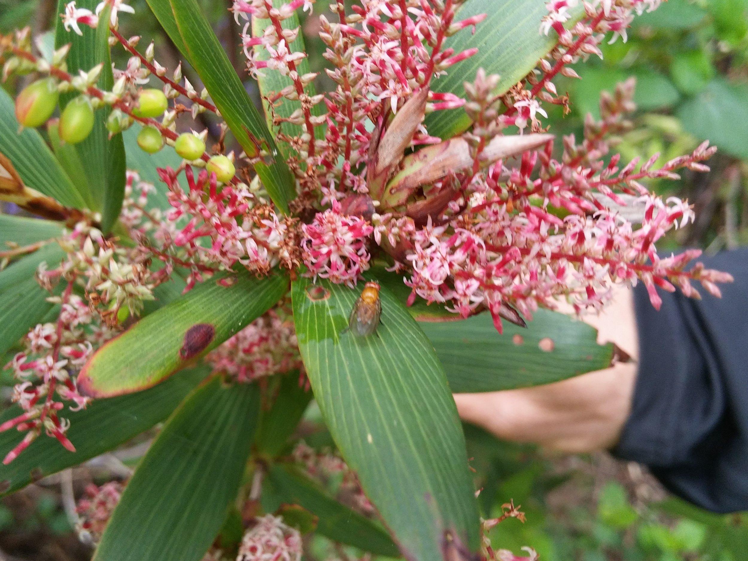 Tassel flower