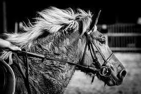 A hard worked horse