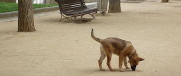 Problemas de higiene.  El mal comportamiento higiénico (pipí y caca en casa) y la coprofagia (comer heces) son conductas normales y frecuentes en los cachorros y se solucionan muy fácilmente. Cuando el problema persiste en un perro adulto es un problema que también puede tratarse.