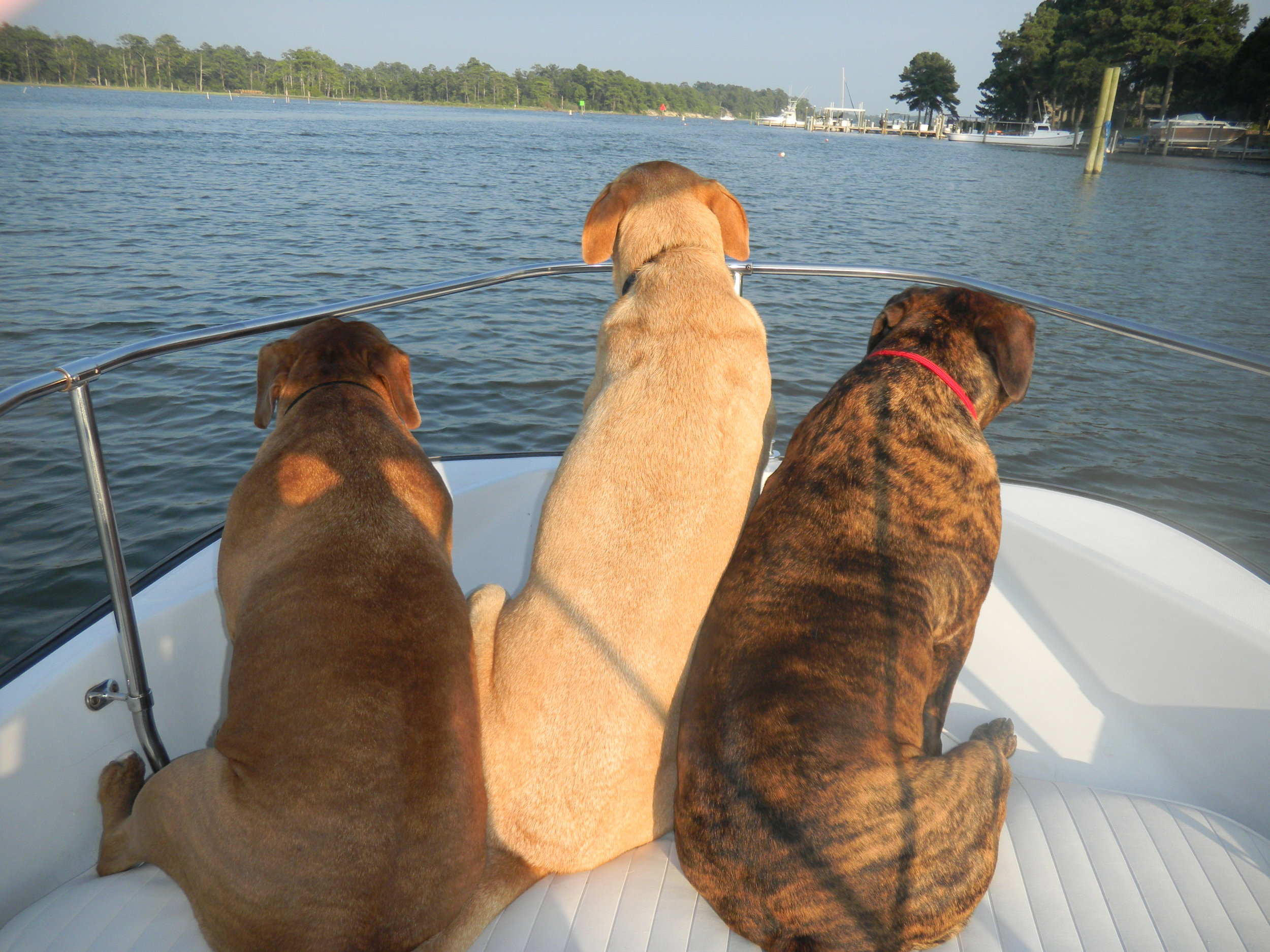 3 Bitches on a Boat.JPG