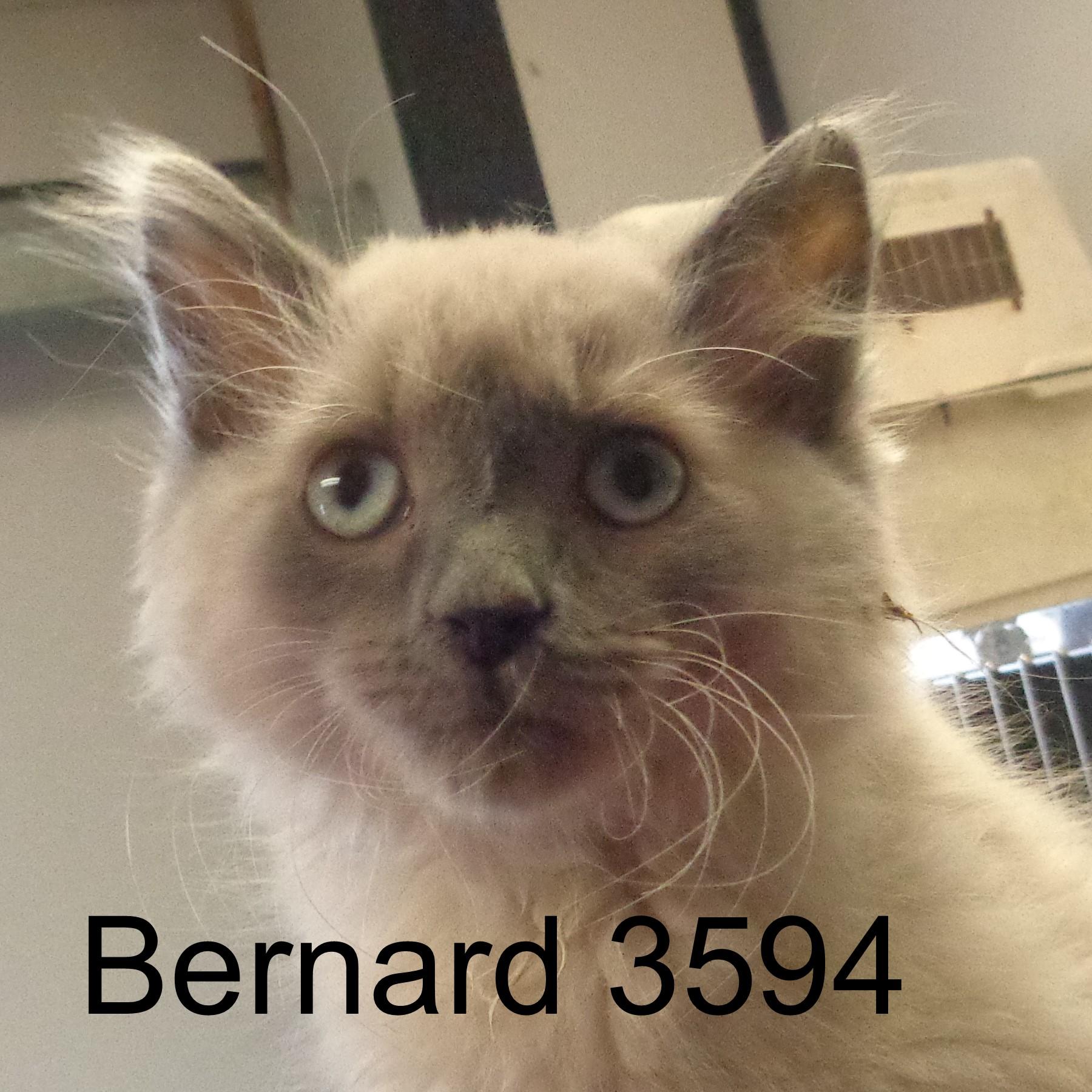 Bernard 3594 .JPG