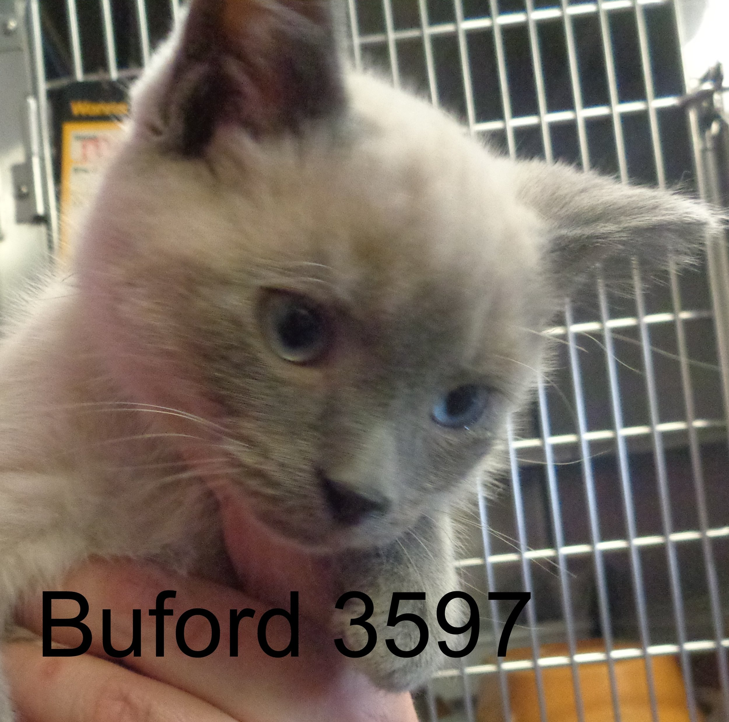 Buford 3597 .JPG