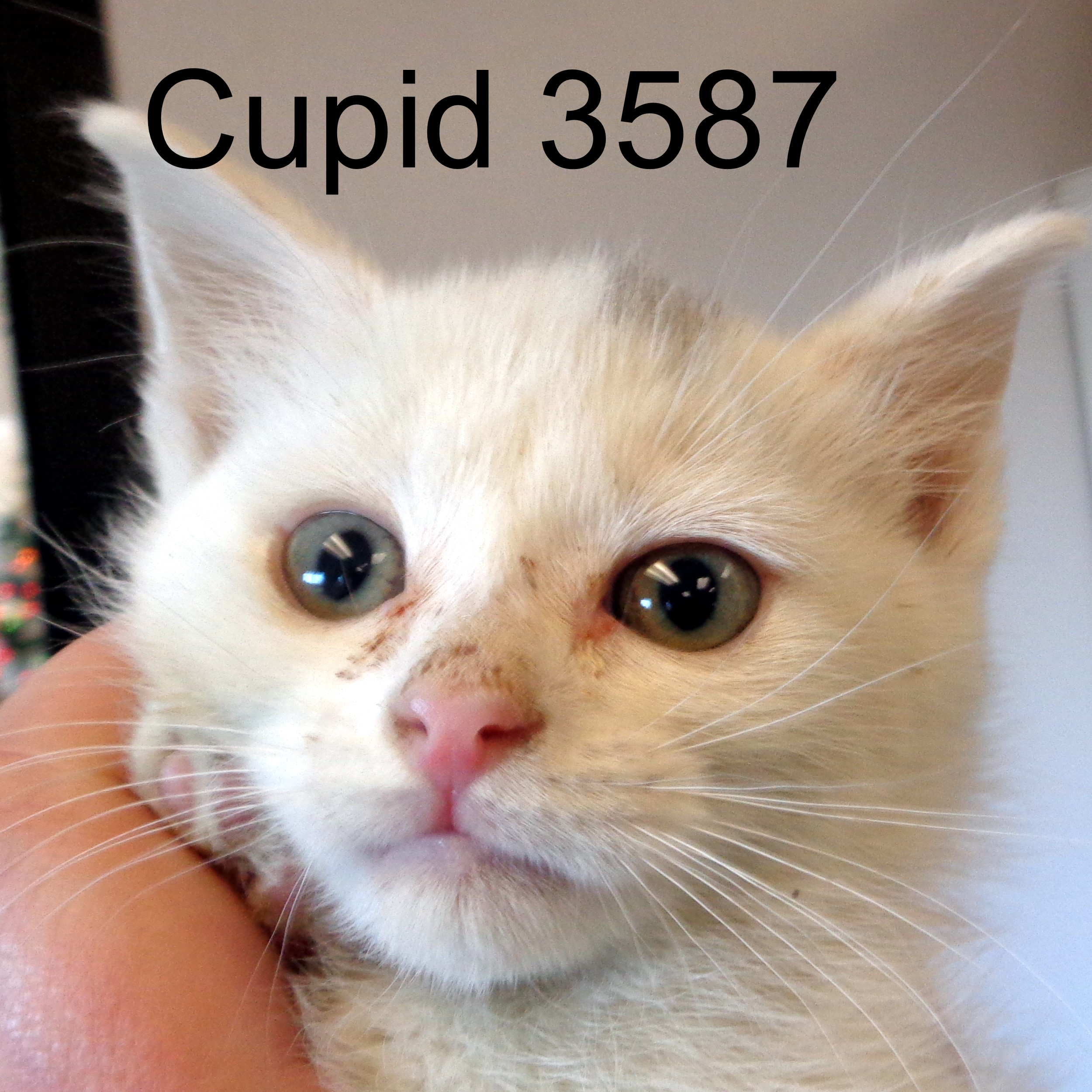 Cupid 3587.JPG