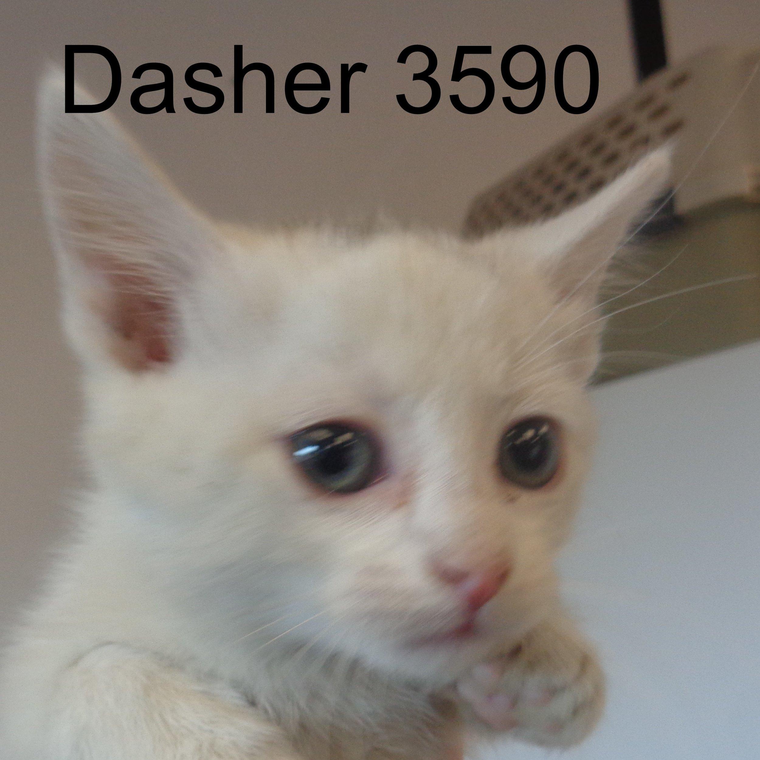 Dasher 3590.JPG