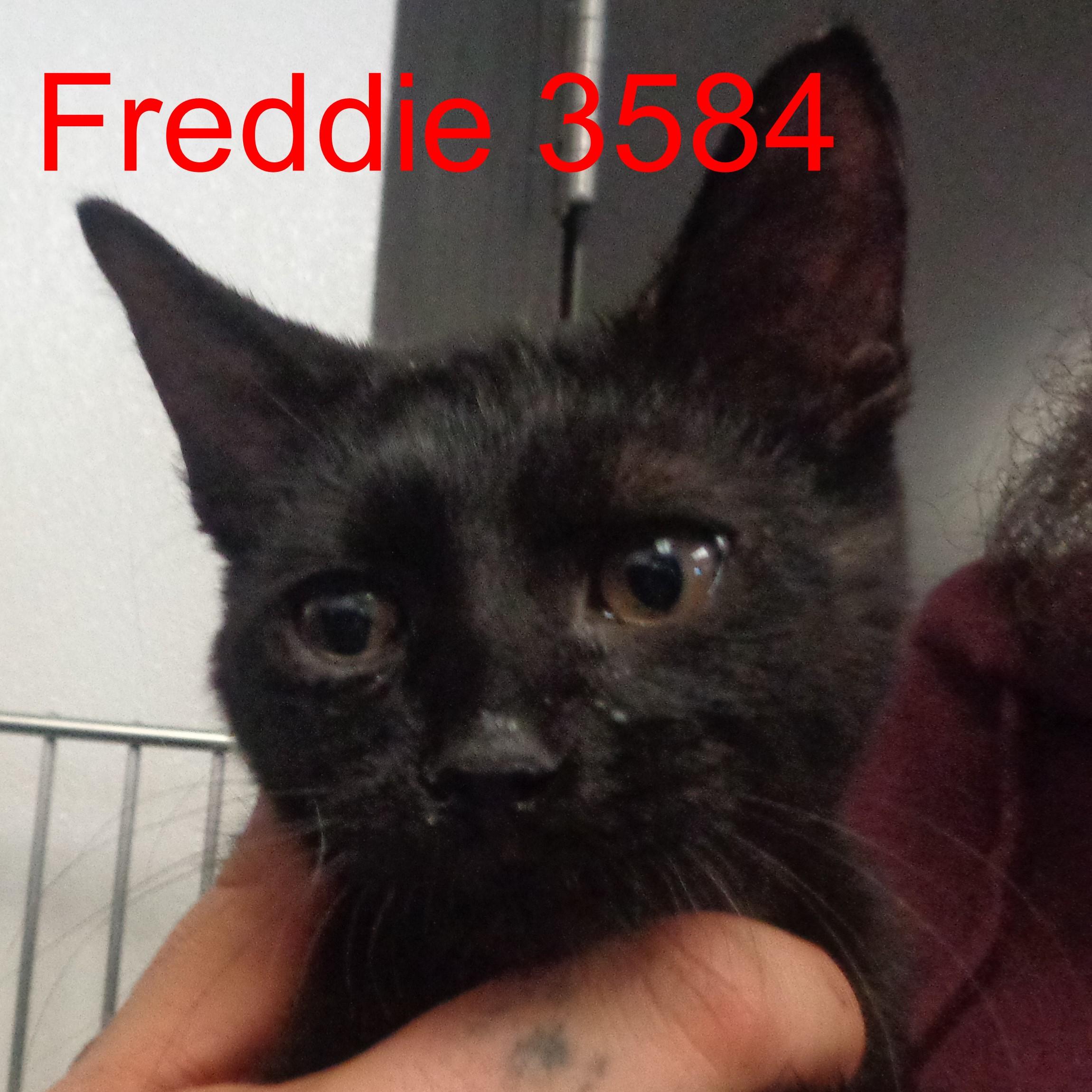 Freddie 3584 .JPG