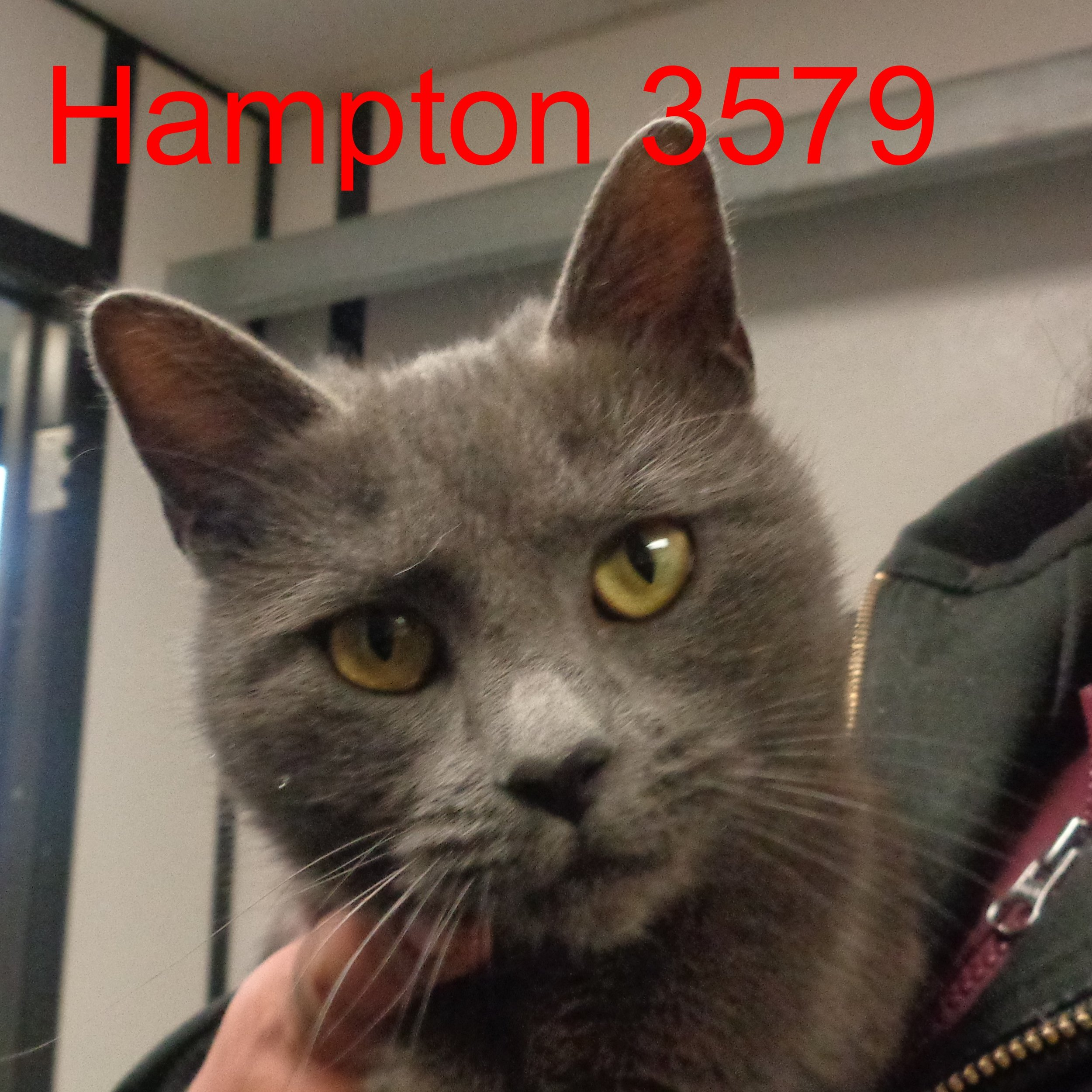 Hampton 3579 .JPG