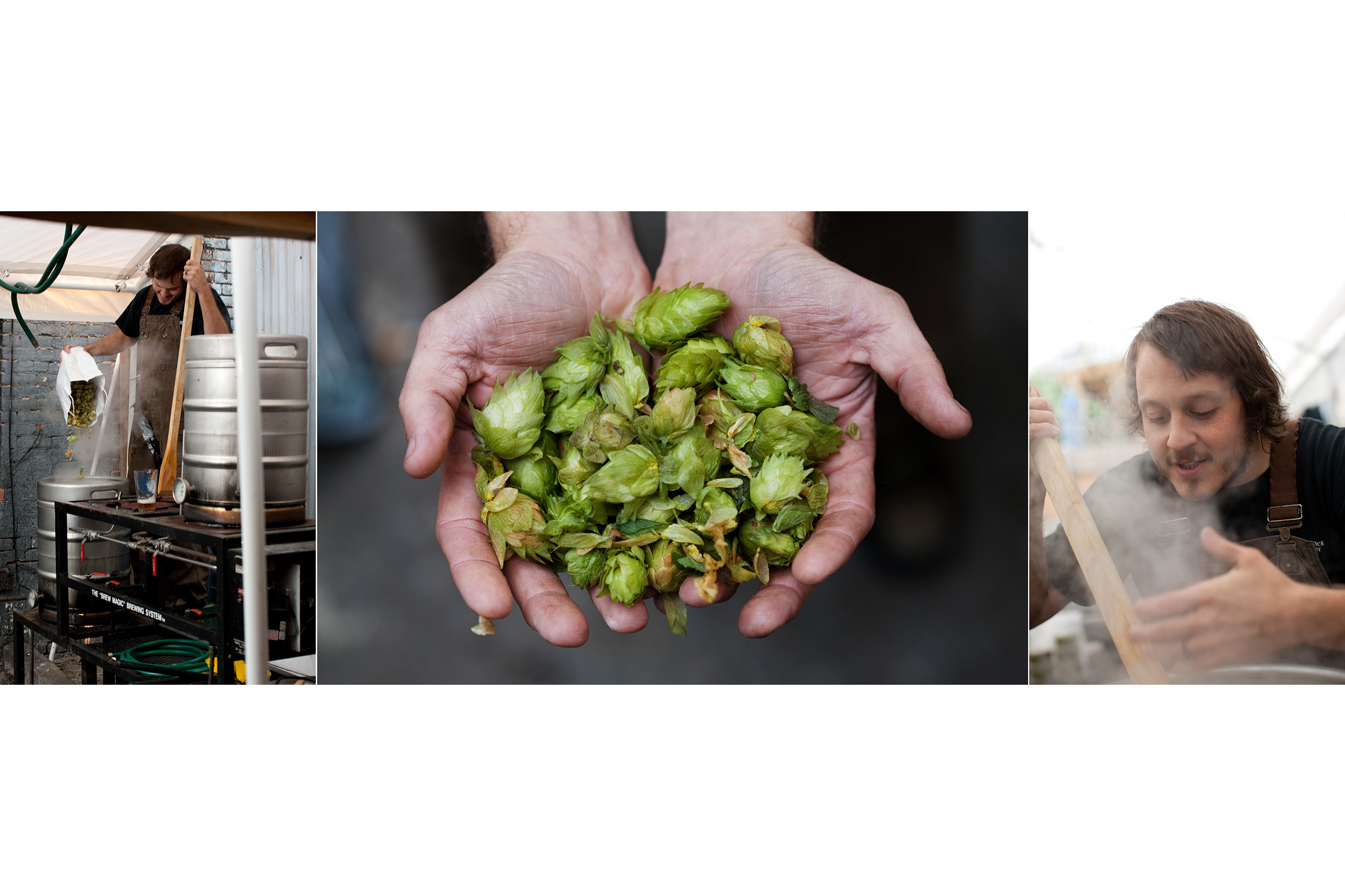 Hops and Beermaking