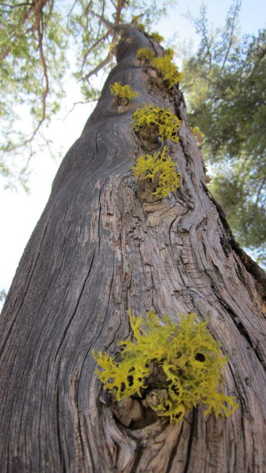 mindfulbalance-tree.jpg