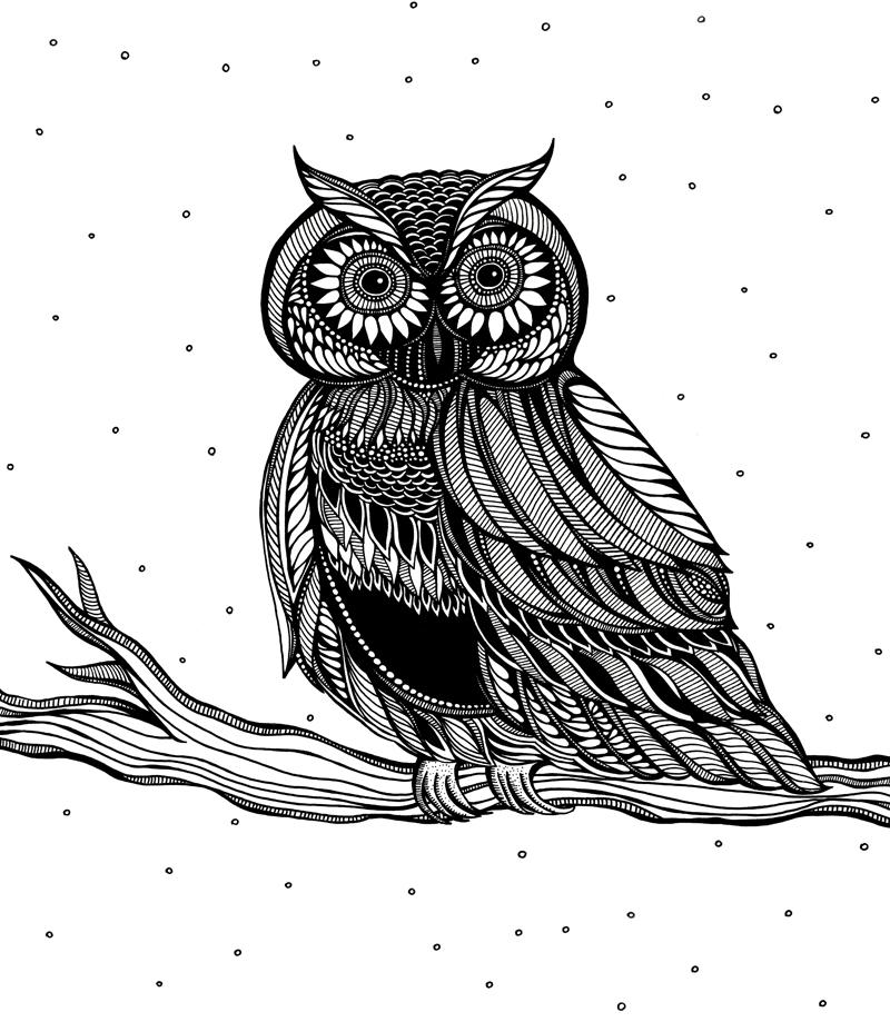 Owl_800_JODYPHAM.jpg