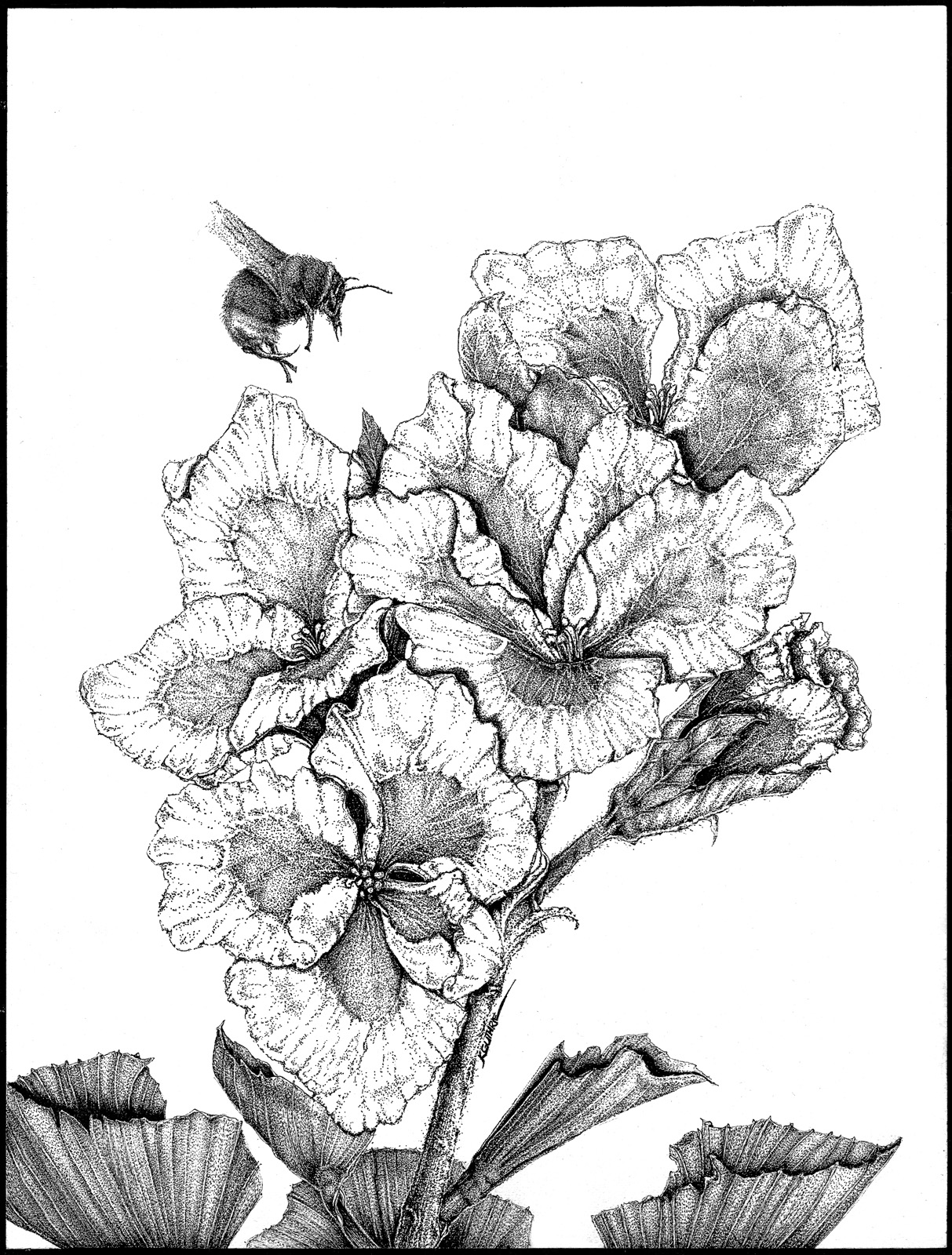 Geranium and the Bee.jpg