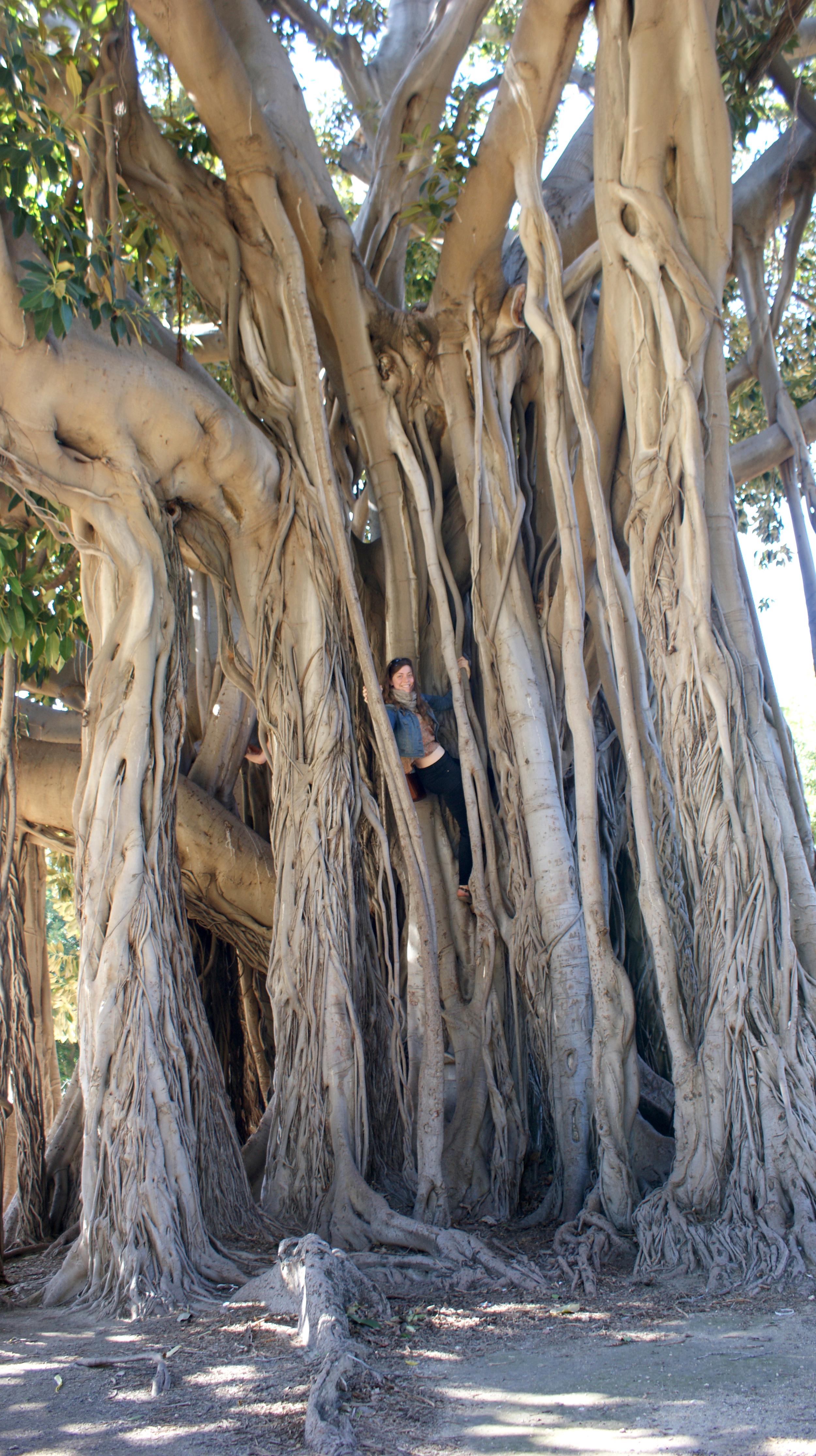 2013 sicily tree.jpg