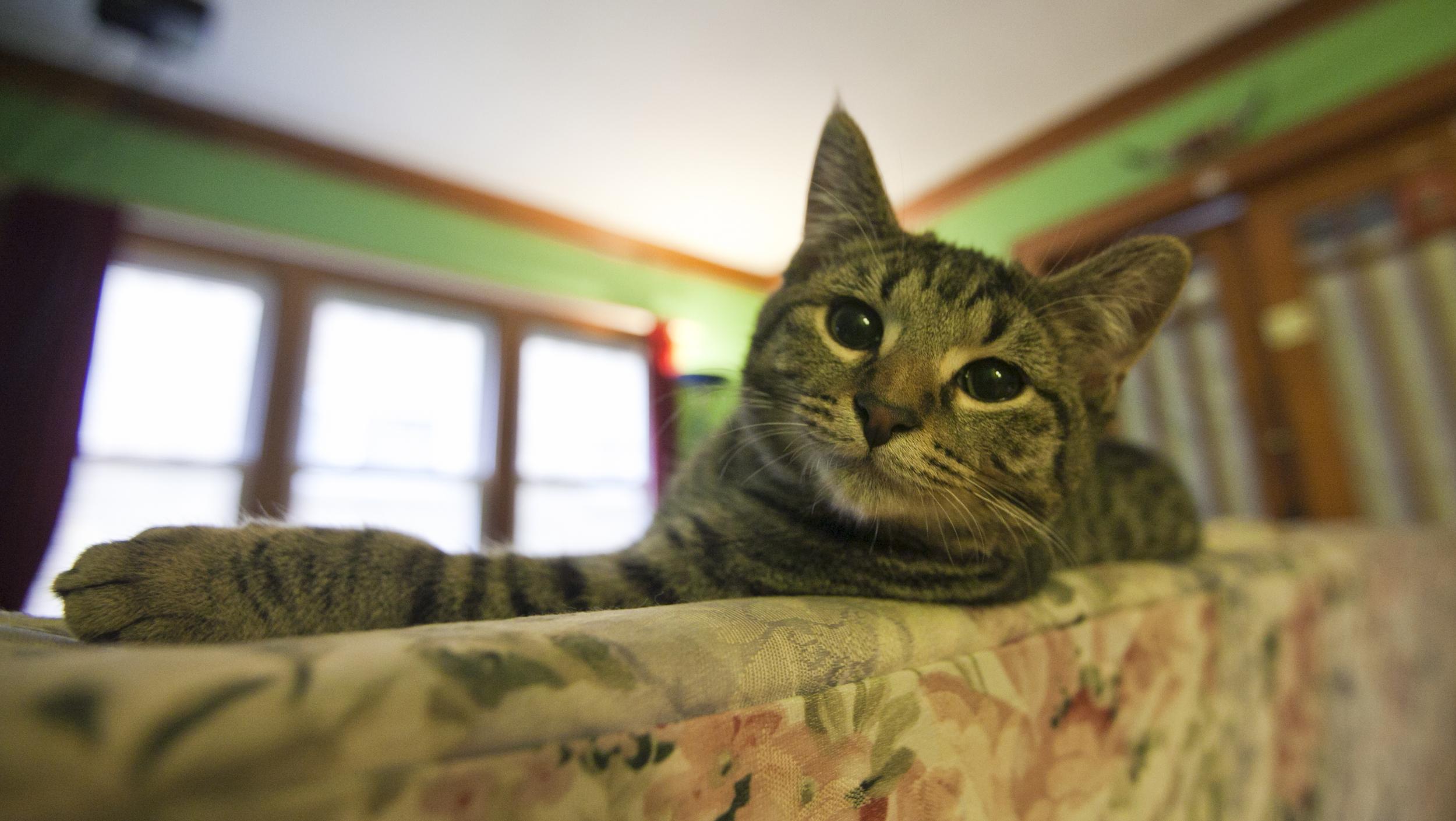 Ferency_Cat.jpg
