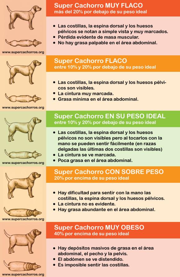 Una muy buena infografía elaborada por  supercachorro.org
