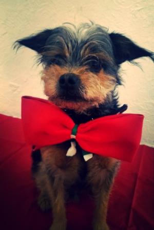 ¡ Tencho  te desea feliz día del papá perruno!