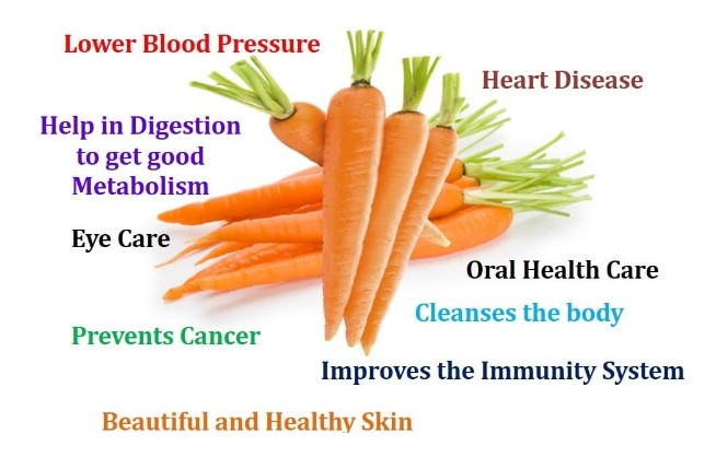 canine-health-benefits-of-carrots.jpg