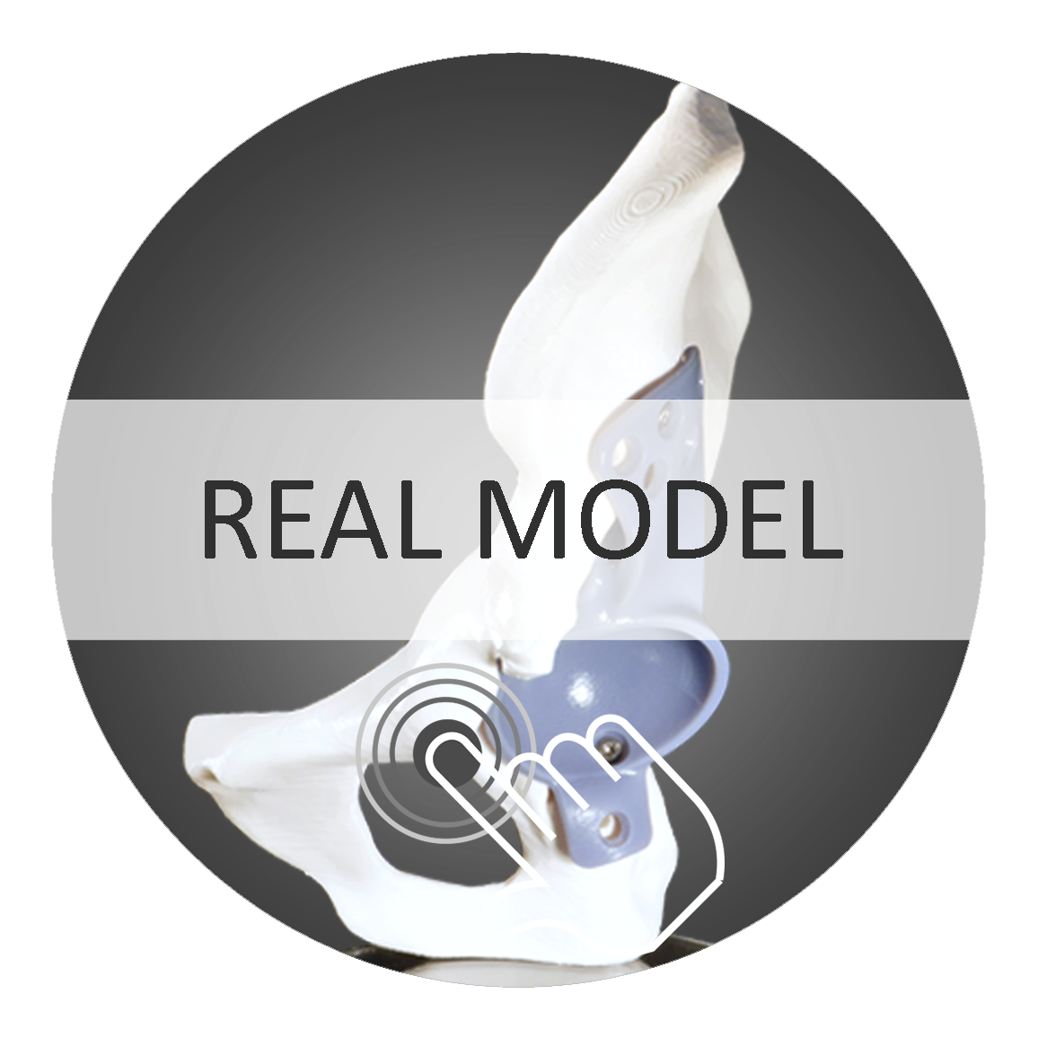 Realmodell Humanx