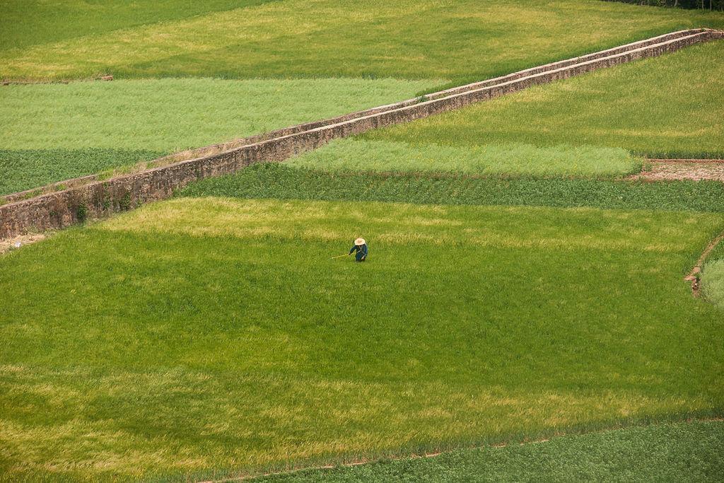 Yunnan_China_Farmer-in-his-grainfield-01