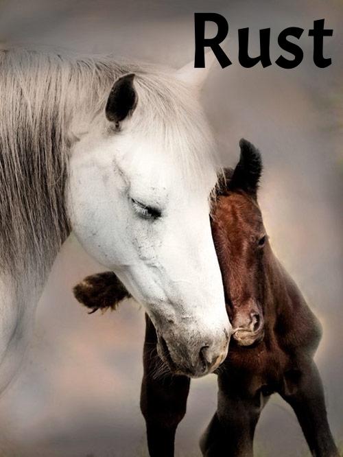 horsespictures2_2.jpg