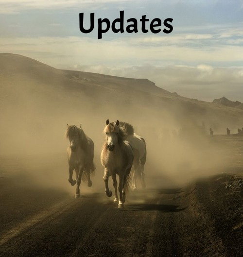 equine-horse-photography-16-500x529.jpg