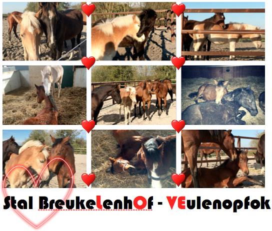 valentijn Stal Breukelenhof