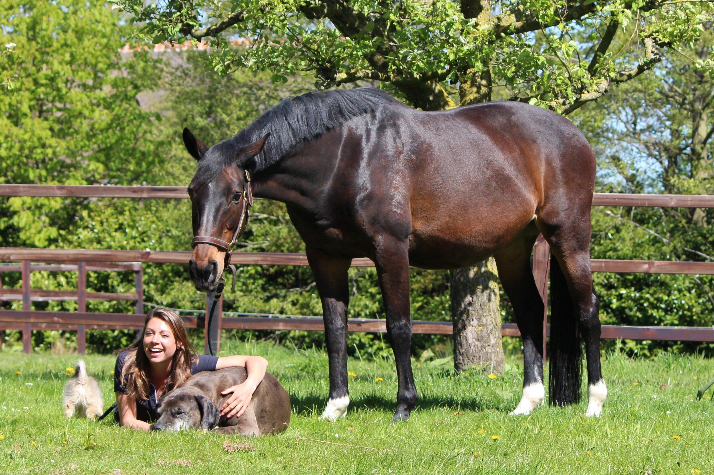 Lynn  (Rinskelinneke)  Metall x Elan XX   Moeder van Boston   Liefste en meest bescheiden paard. Queen of the stable en een grote motivator om een eigen stal te hebben waar zij voor altijd bij ons kan blijven. We kochten haar drachtig en daar is Boston uitgekomen.