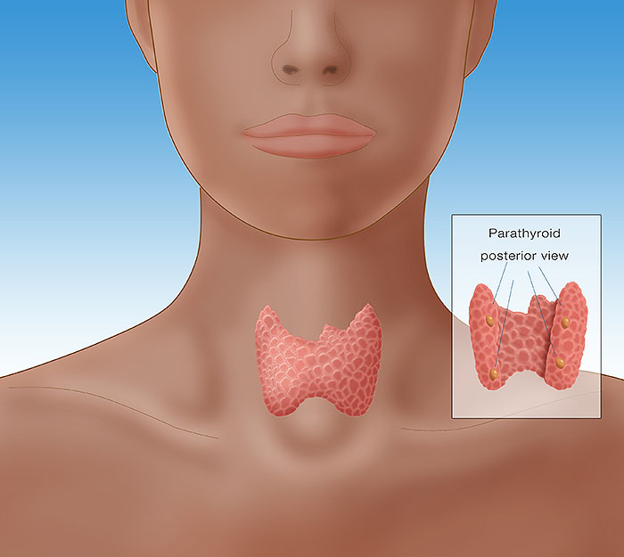 Thyroid & Parathyroid