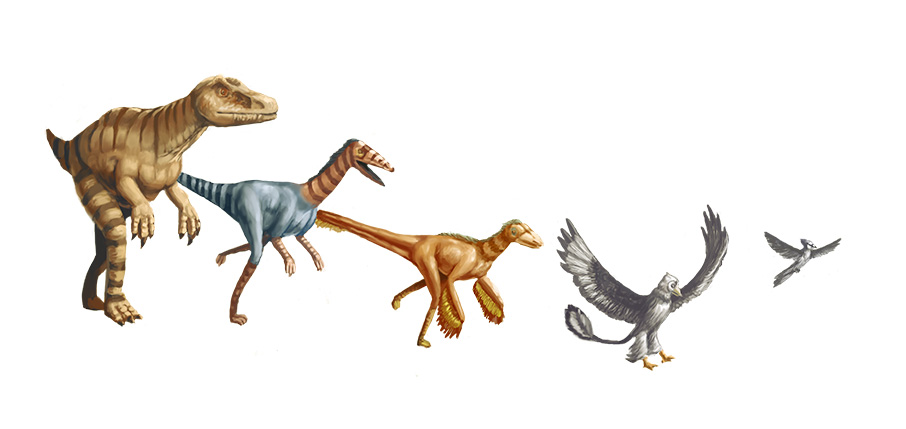 Evolution of Raptors