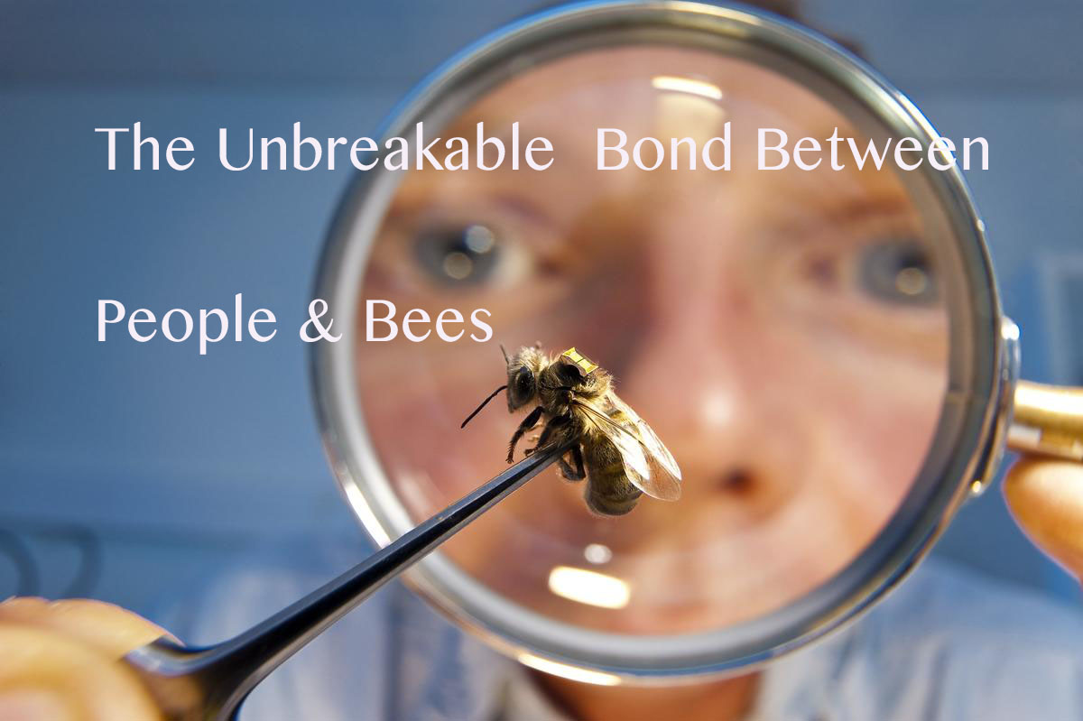 A researcher holds a honey bee with a radio frequency identification chip (RFID) attached to it's back.