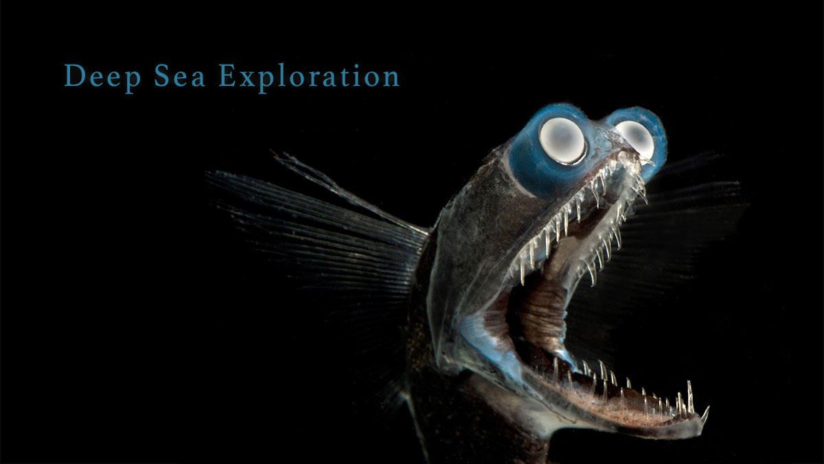 A Telescope Fish has eyes that can track bioluminescent prey