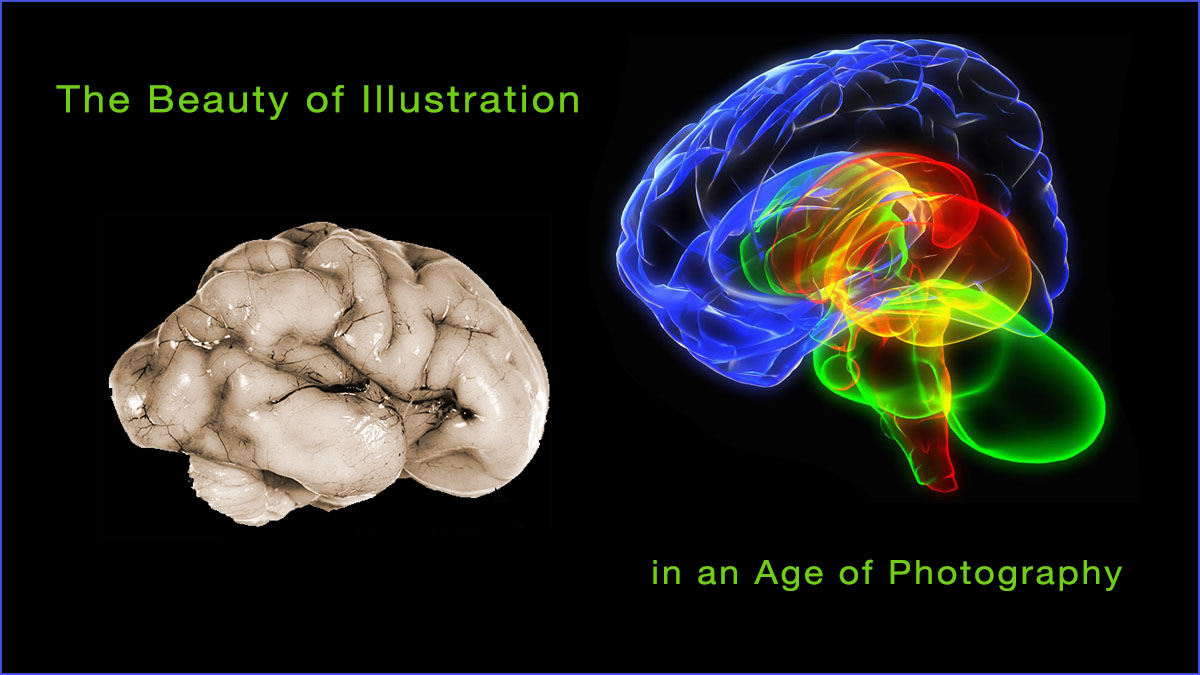 Photograph of a normal human brain and a 3D illustration of a human brain.