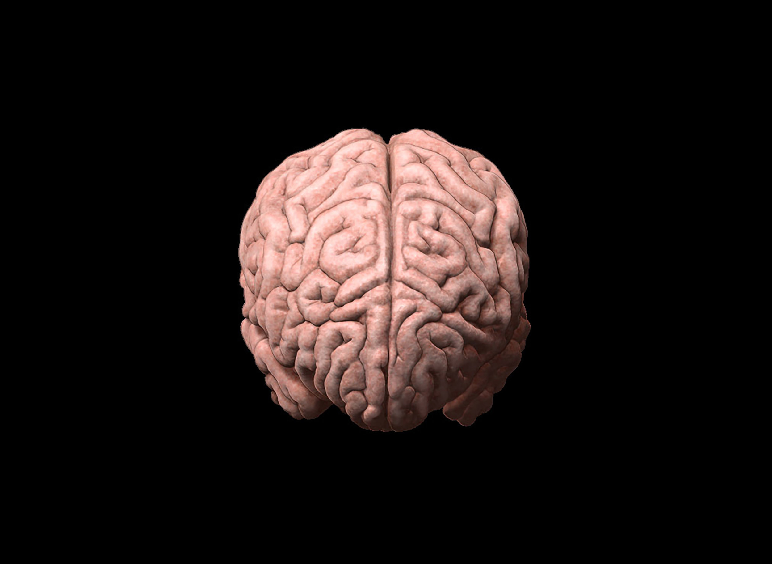 Anterior Brain, 3D Illustration