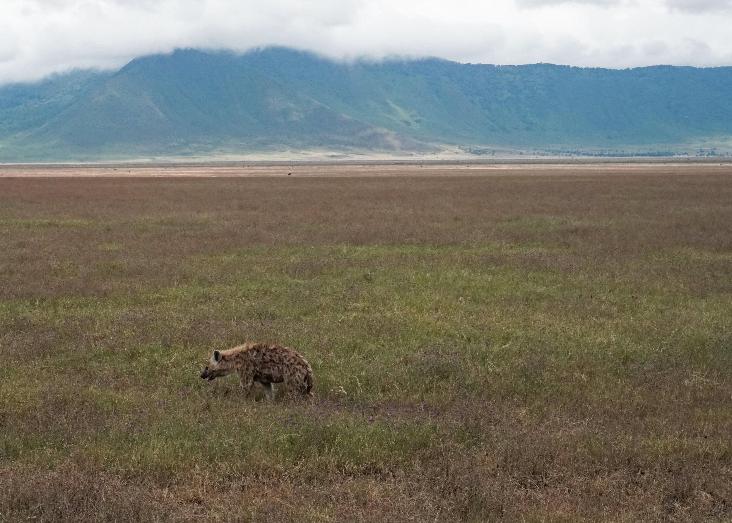 hyena crater.jpg