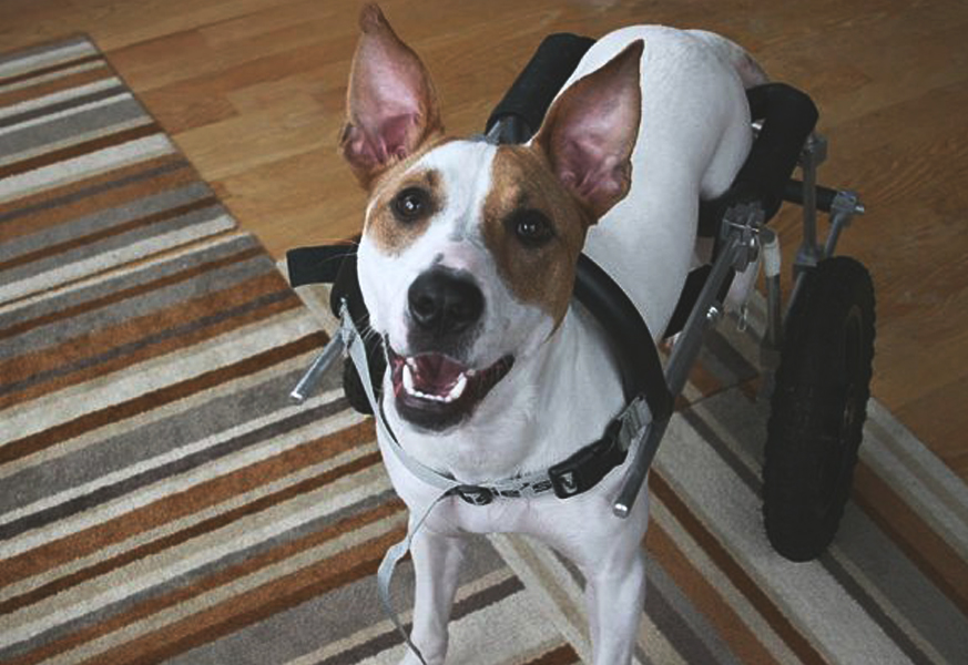 August 2014  Chicago Now   Bialy's Wellness Foundation: Special dog's memory