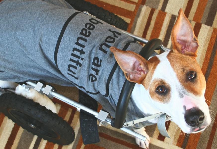 June 2014  Joyful Paws   Bialy, Special Needs Ambassador Dog Passes Away