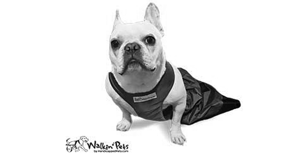 Purchase items from Walkin Pets by handicappedpets.com and a portion of all proceeds will benefit Bialy's Wellness Foundation.