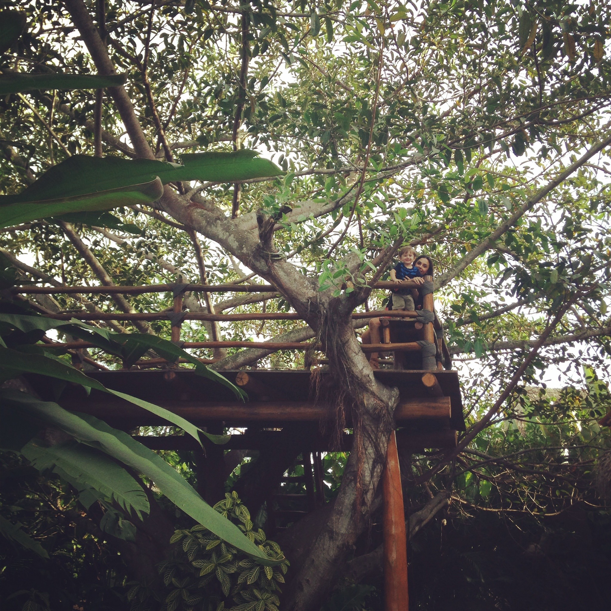 Yes, that's a treehouse in the backyard!