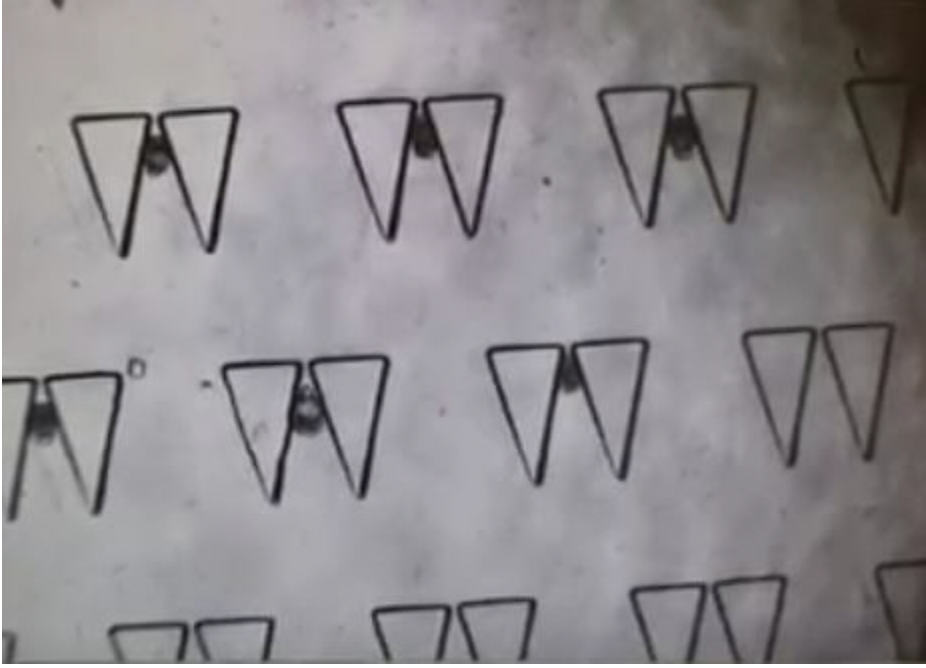 Figure 1.  Image showing array of traps with  Aiptasia  larvae within them.