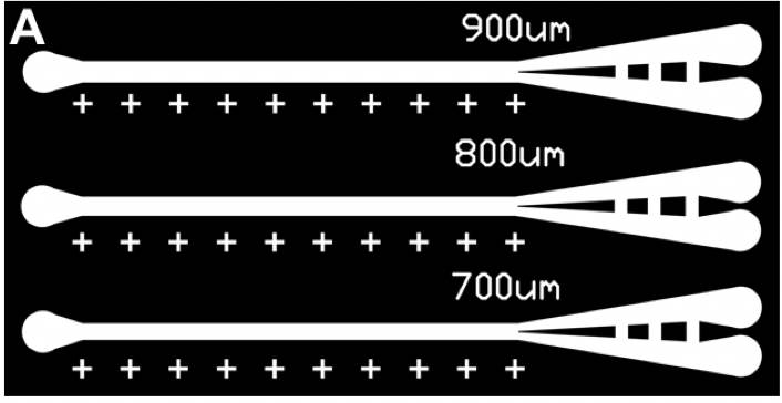 Figure 1.  Schematic showing microfluidic planarian guillotines with varying channel widths after the guillotine blade.