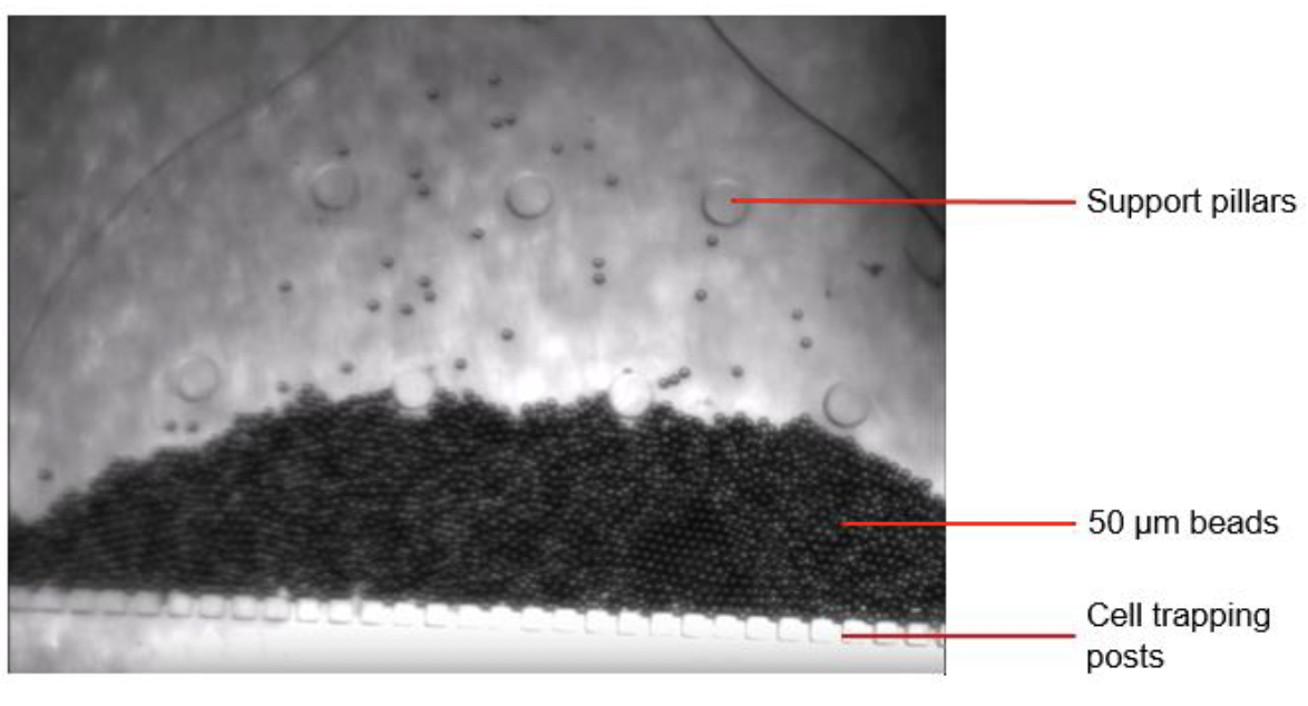 Figure 2.  Image of the microfluidic device containing pillars with 50 µm gaps between them and 50 µm diameter beads successfully captured under constant pressure flow.
