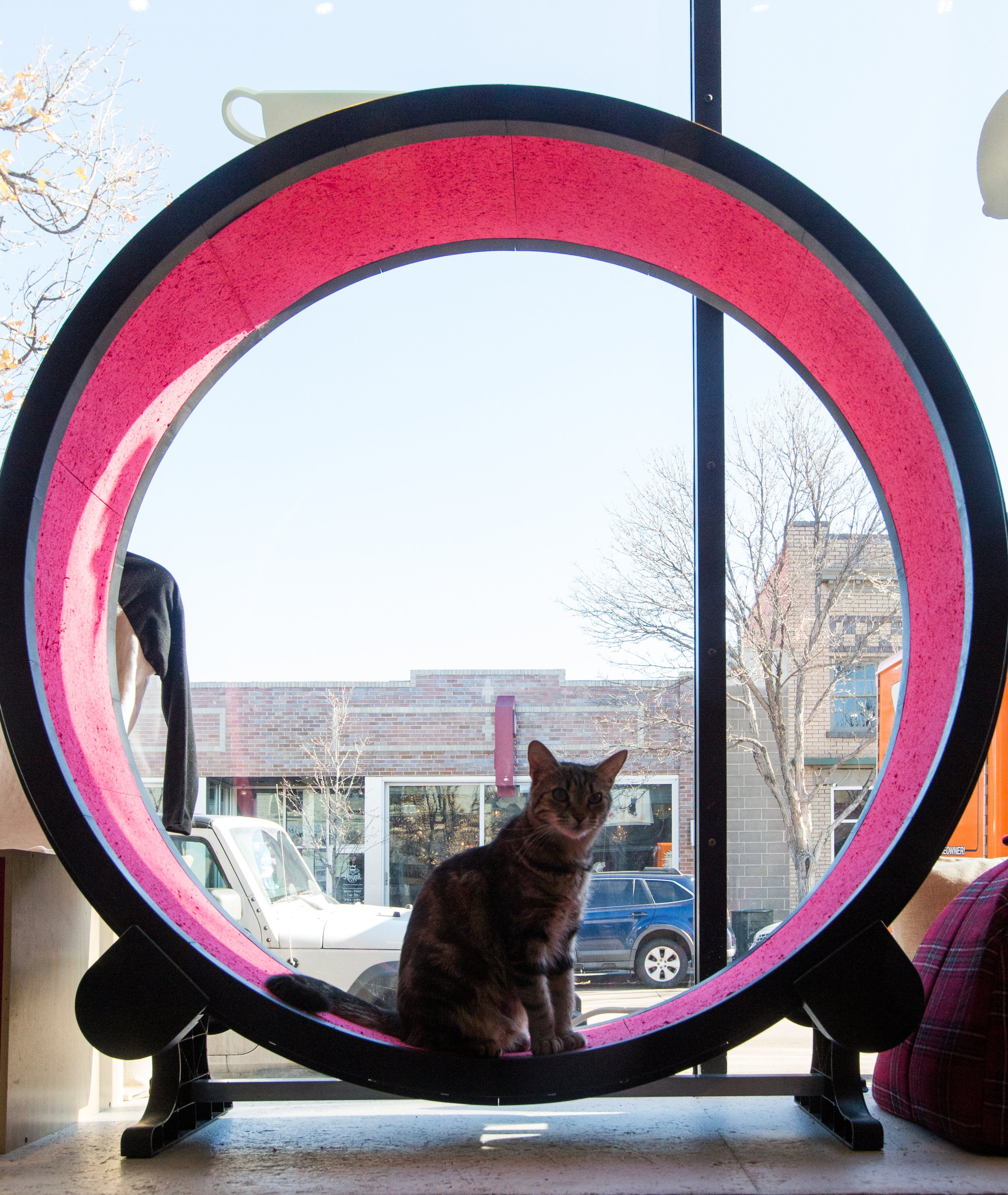 The cat wheel on our cafe window seat is occasionally used by the kitties, to the delight of passersby.  Image credit: Danielle Lirette Photography