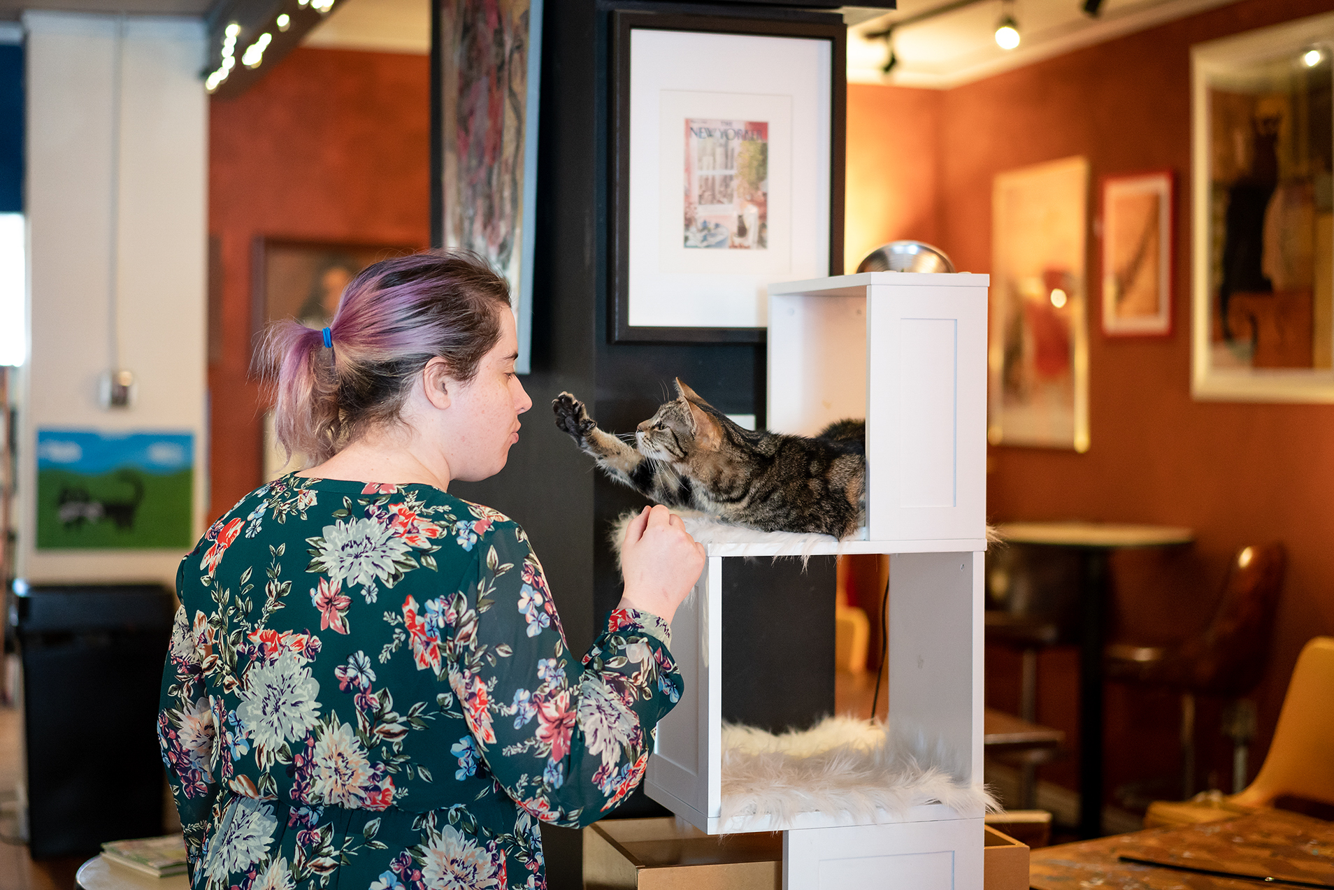 A customer interacts with a cat.  Image Credit: Spoticus Photography
