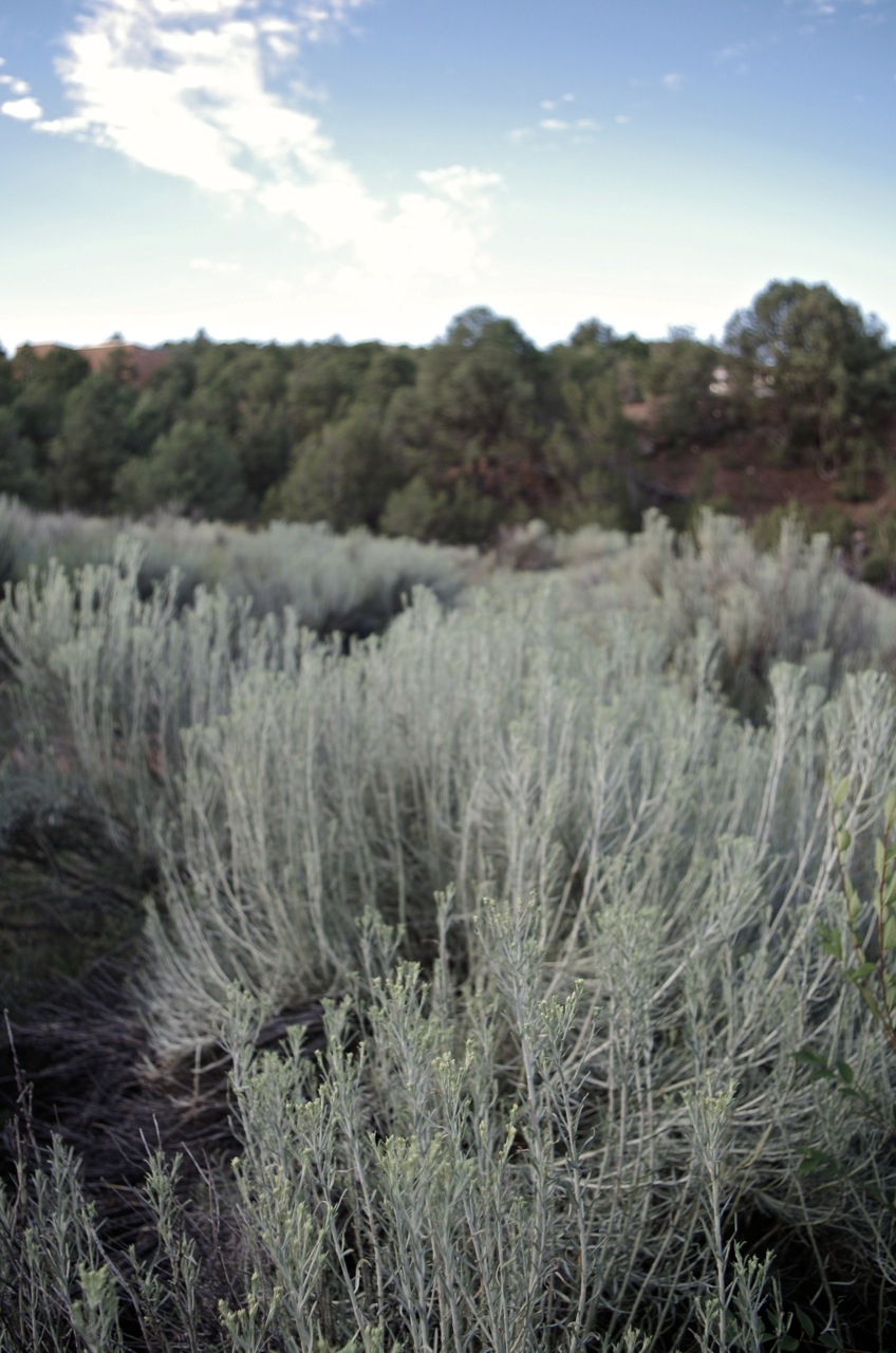 wildweed.jpg