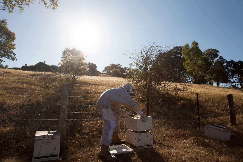 Bees_02_web.jpg
